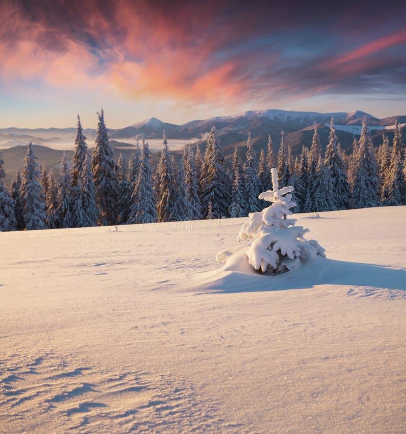 Prachtige de winterzonsopgang in bergbos met behandelde sneeuw stock fotografie