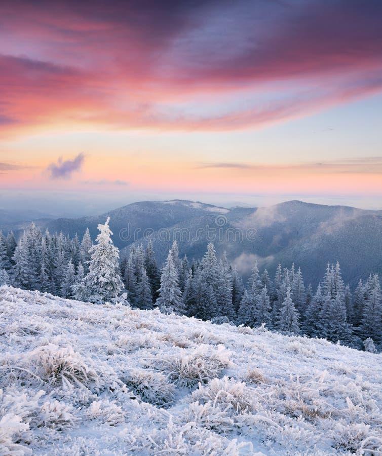 Prachtige de winterzonsopgang in bergbos met behandelde sneeuw stock afbeelding