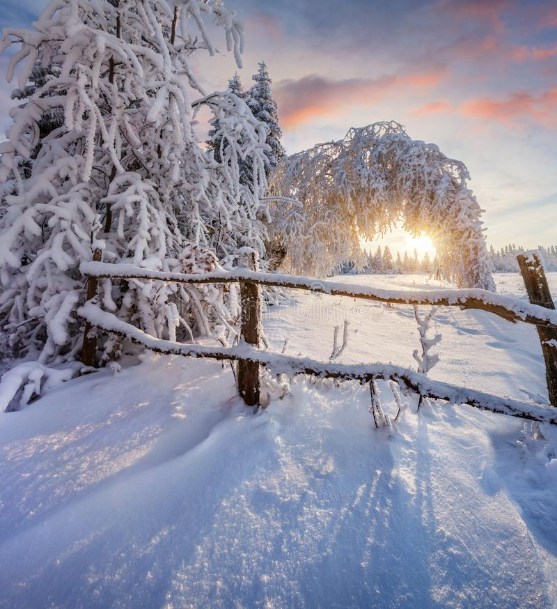 Prachtige de winterzonsopgang in bergbos met behandelde sneeuw stock afbeeldingen