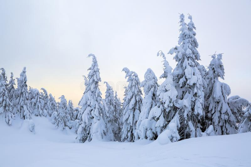 Prachtige de winterzonsopgang hoog in de bergen op mooie bossen en gebieden Toeristenlandschap Fabelachtige de winterachtergrond royalty-vrije stock fotografie