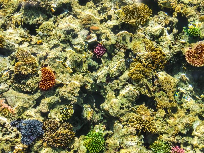 Prachtige en mooie onderwaterwereld met koralen en tropische vissen stock fotografie