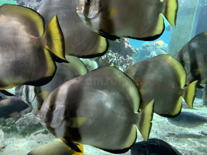 Prachtige en mooie onderwaterwereld met koralen en tropische vissen royalty-vrije stock afbeeldingen
