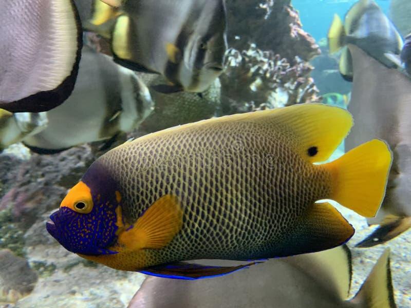 Prachtige en mooie onderwaterwereld met koralen en tropische vissen royalty-vrije stock foto's