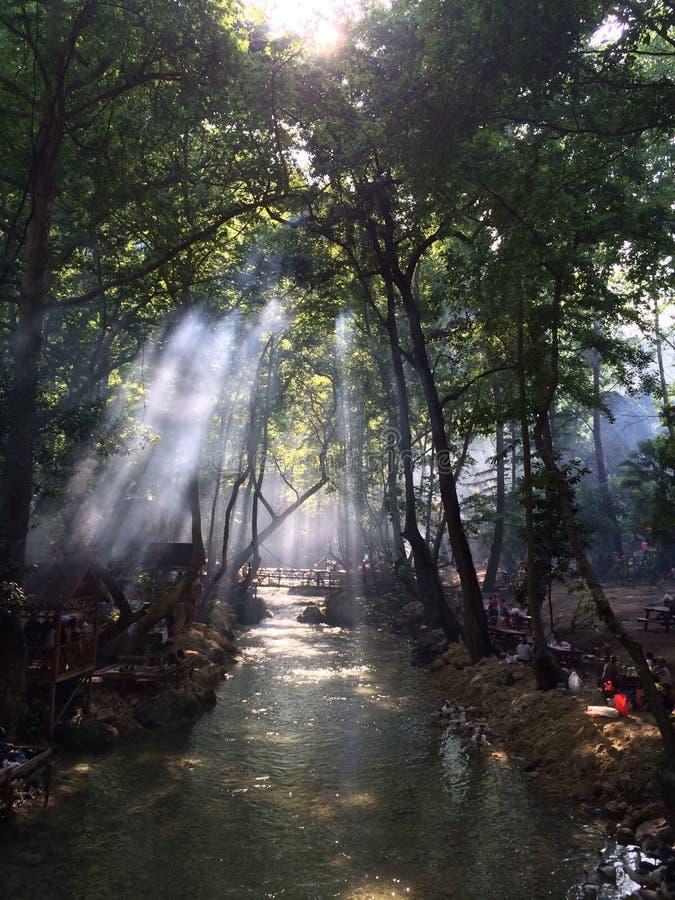 prachtige meningen van de plaats van de arts zonlicht en meningen van de rivier in het bos royalty-vrije stock foto