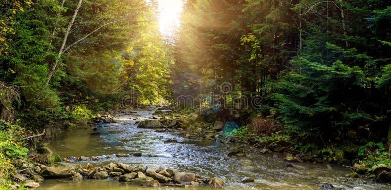 Prachtige nevelige ochtend op de bergrivier kleurrijke rees die in zonlicht gloeien stock foto's
