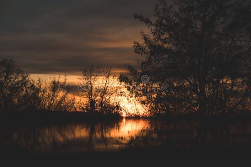 Prachtige zonsondergang die door bomen in de avond glanzen royalty-vrije stock fotografie