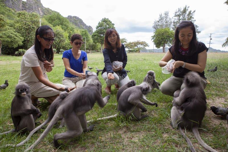 Prachuap Khiri Khan泰国- september24,2016:对暗淡的叶子猴子的泰国旅游哺养的坚果在多数的Aow Manao海滩一 免版税图库摄影