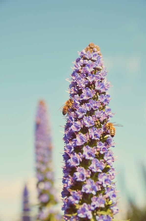 Pracowity jak pszczoła obrazy royalty free