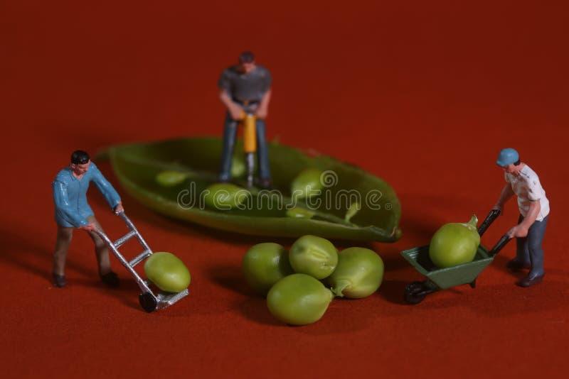 Pracownicy Budowlani w Konceptualny Karmowy metaforyka Z Nagłymi grochami zdjęcia stock