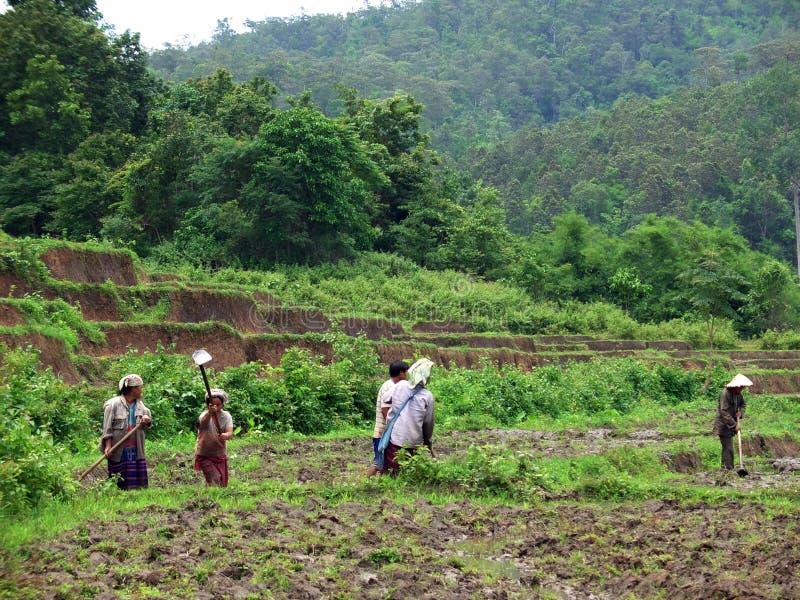 pracownicy ryżu fotografia royalty free