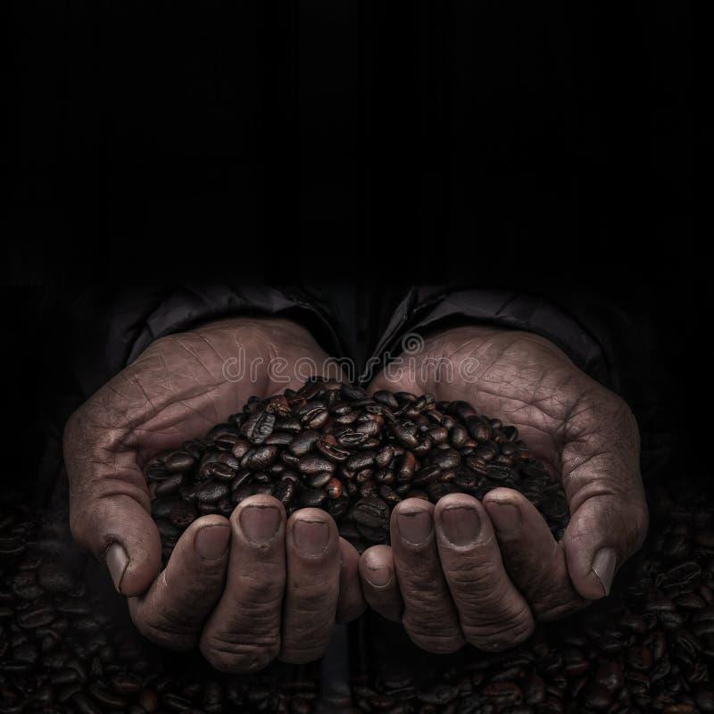 Pracownicy wręczają z kawową fasolą obraz stock