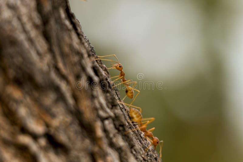 Pracownik mrówka zdjęcie royalty free