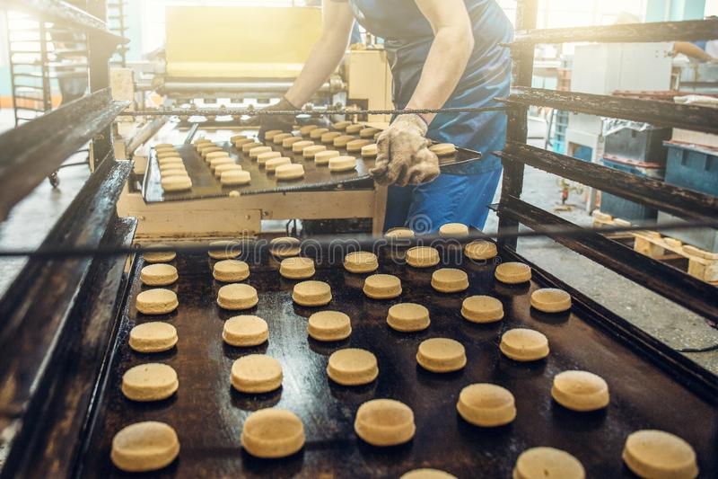 Pracownik przy ciasteczko fabryką stawia tace z ciastkami od ciasta w dodatku specjalnego stojaka dla gotować w kuchence Przemysł obraz stock