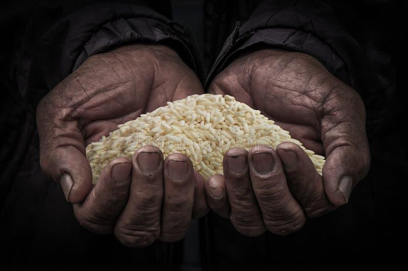 Pracownik ręka niesie ryż obrazy stock