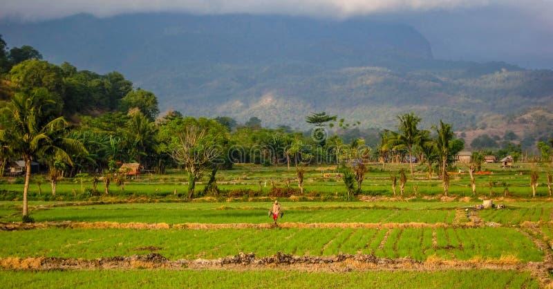 Pracownik w pole tropikalnych klimatach, Flores, Indonezja zdjęcie royalty free