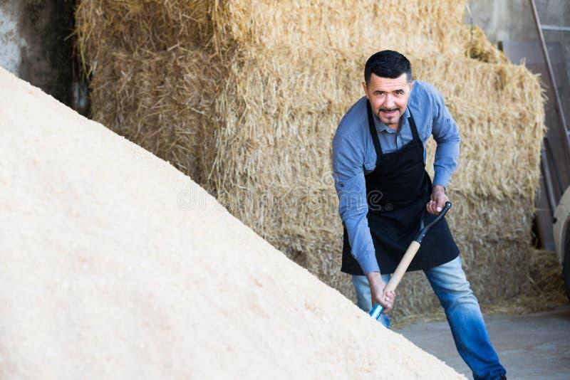 Pracownik wykopuje piasek używać łopatę obraz stock