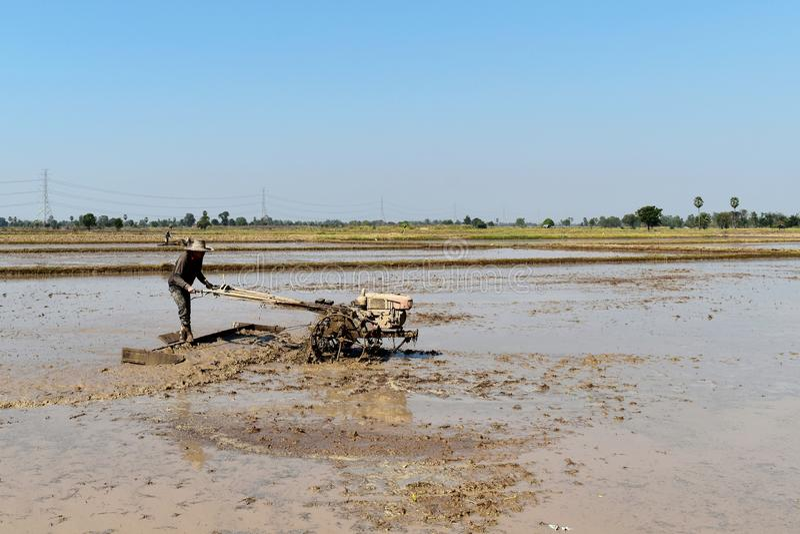 Pracownika oranie w ryżu polu przygotowywa roślina ryż fotografia royalty free