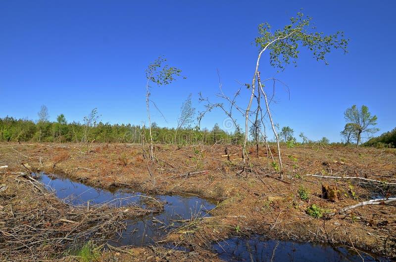 Practuice da silvicultura do desflorestamento foto de stock royalty free