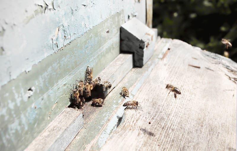 Pracujące pszczoły zdjęcie stock