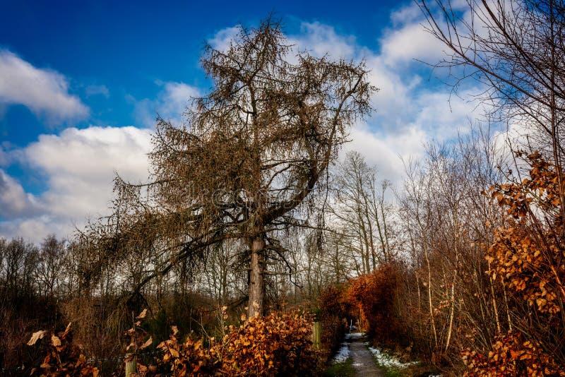 Pracującej Lasowej zimy markotny ranek obraz royalty free