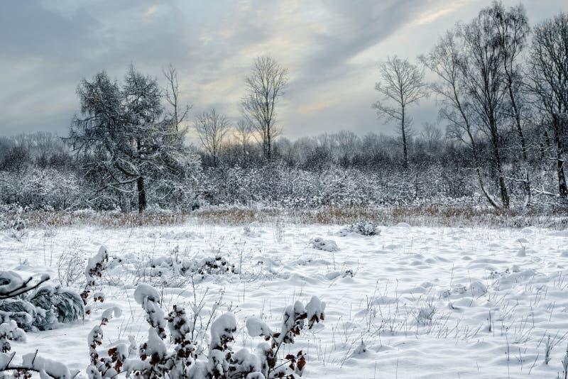 Pracującej Lasowej zimy markotny ranek fotografia royalty free