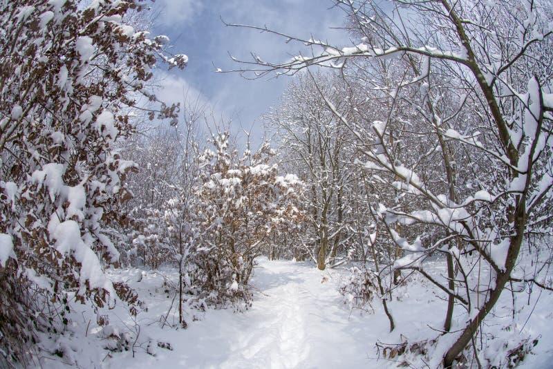 Pracującej Lasowej zimy markotny ranek zdjęcie stock