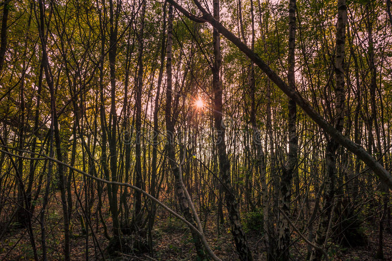 Pracujący las zdjęcie stock