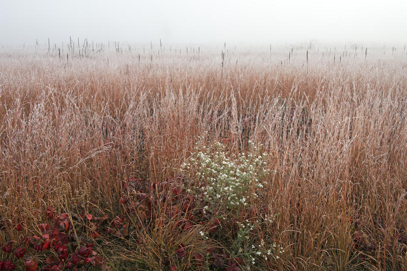Pradaria alta geada da grama na névoa foto de stock royalty free