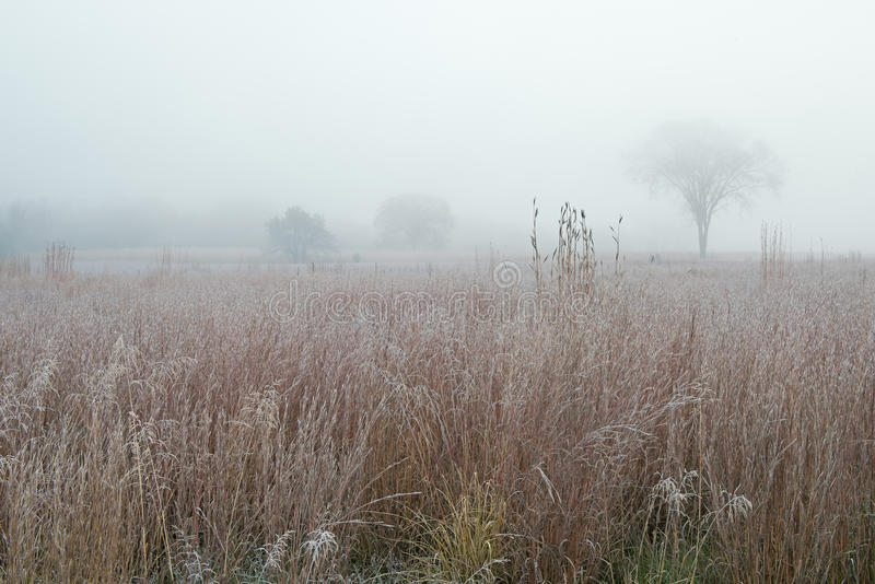 Pradaria alta geada da grama na névoa foto de stock