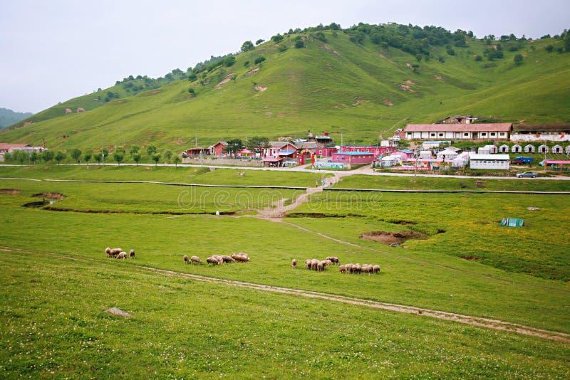 Pradaria de Baoji Guan Shan fotografia de stock royalty free