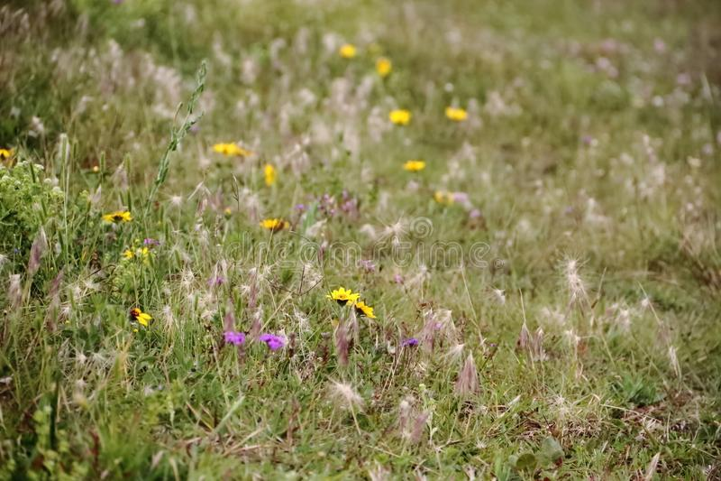 A pradaria do campo floresceu na mola imagem de stock
