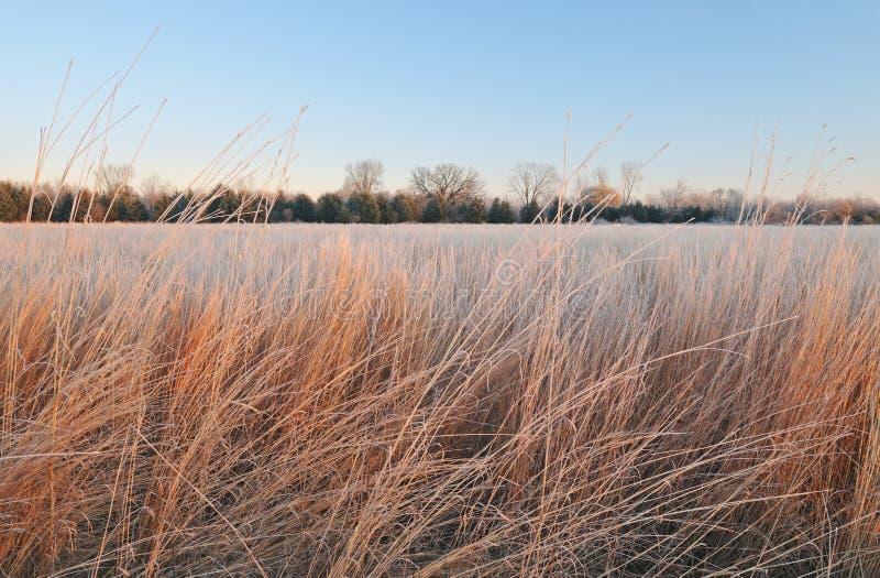 Pradaria geada inverno fotografia de stock