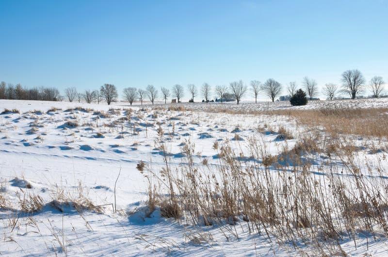 Pradera nevada de la reserva del parque del lago spring fotos de archivo