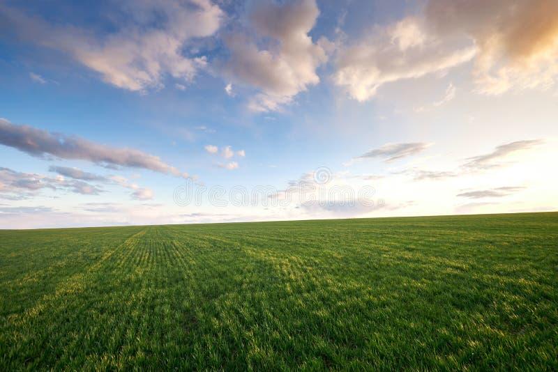 Pradera verde y cielo azul con nubes al atardecer imágenes de archivo libres de regalías