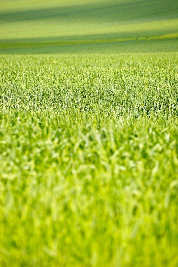 Download Prado imagem de stock. Imagem de crescimento, campo, cena - 26513587