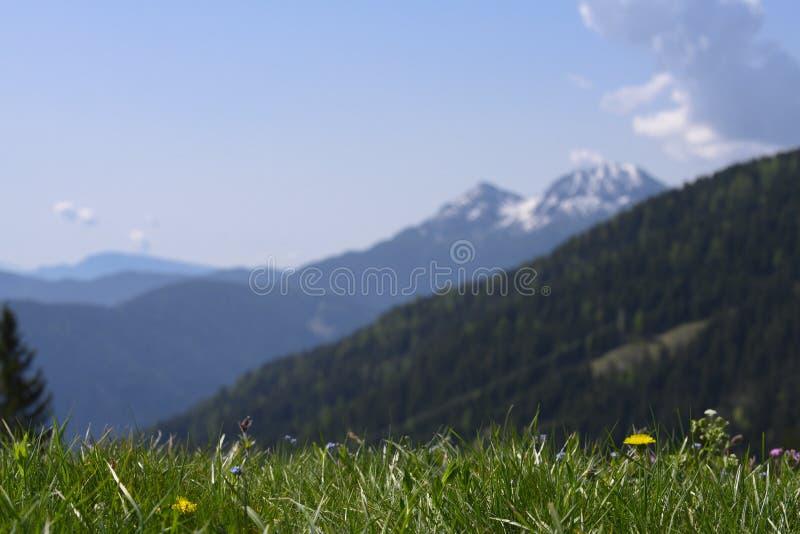 Prado afiado da grama em montanhas dianteiras e unsharp imagem de stock