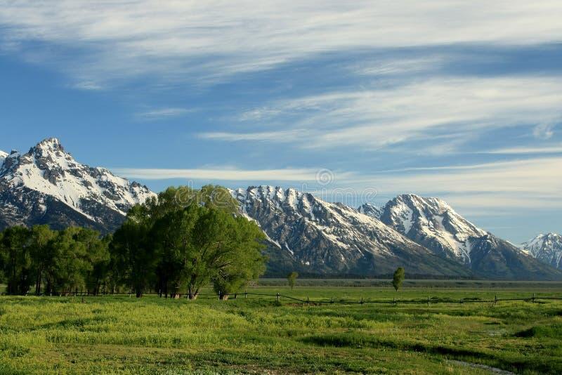 Prado alpino fotografia de stock royalty free