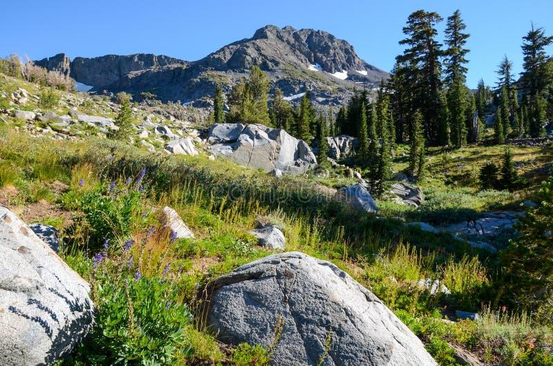 Prado alpino con los wildflowers y los cantos rodados del granito bajo pico de alta montaña foto de archivo libre de regalías