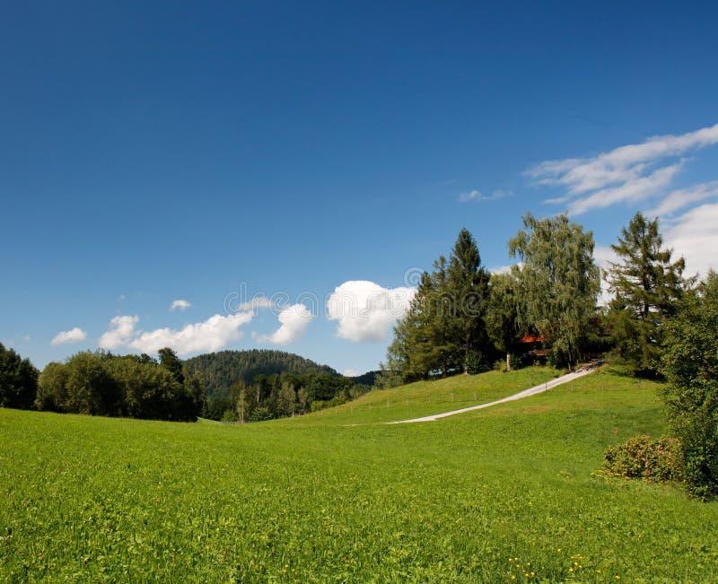 Download Prado Alpino Luxúria No Verão Imagem de Stock - Imagem de azul, manhã: 10059317
