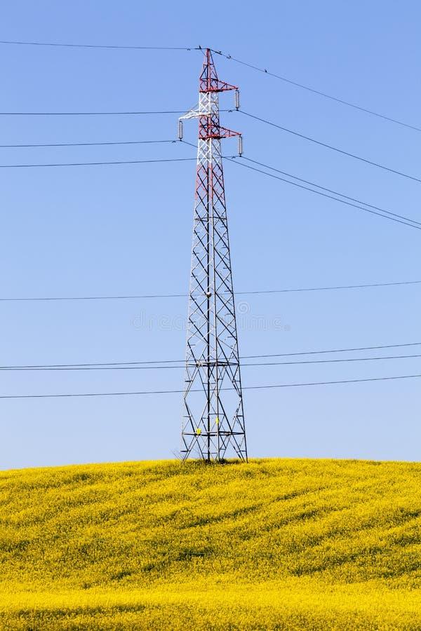 Prado amarillo completamente florecido, pilón de la electricidad y cielo azul Energía de la primavera imágenes de archivo libres de regalías