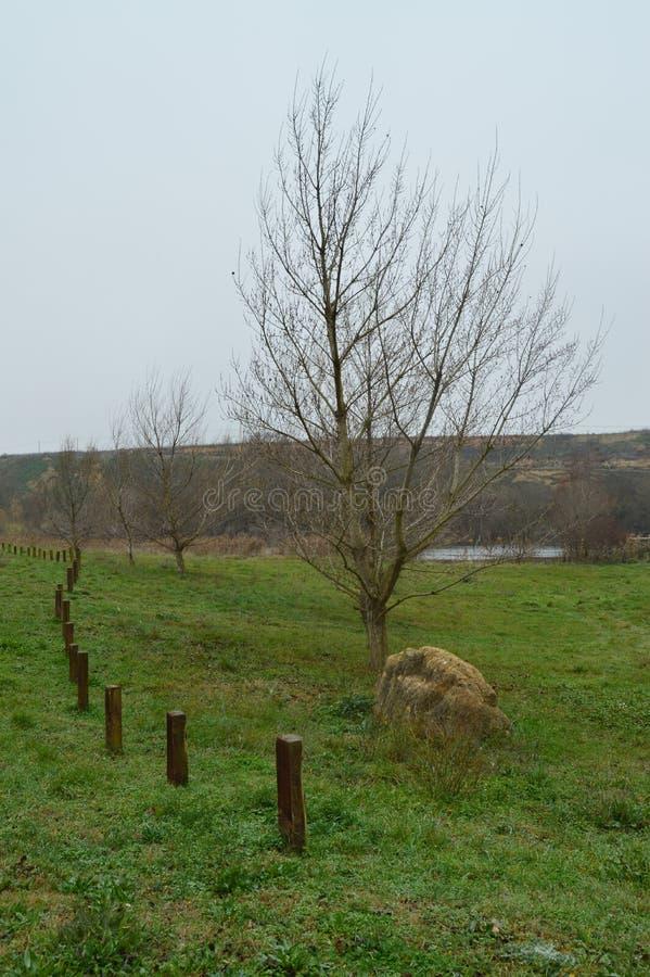 Prado bonito com as árvores sem a folha perto do Ebro River em San Vicente De La Sonsierra Natureza, paisagem, história, curso imagens de stock royalty free