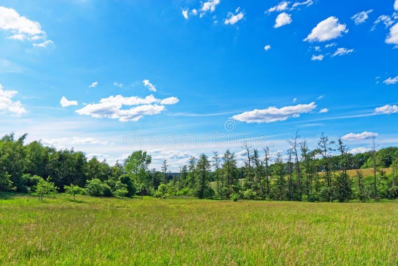 Prado bonito contra o céu azul em Luneburg Heath fotografia de stock royalty free