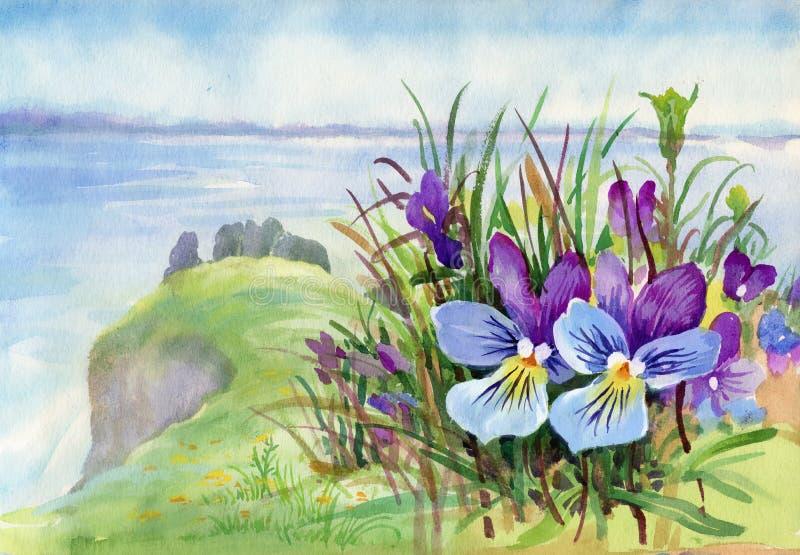 Prado bonito da íris na aquarela ilustração do vetor