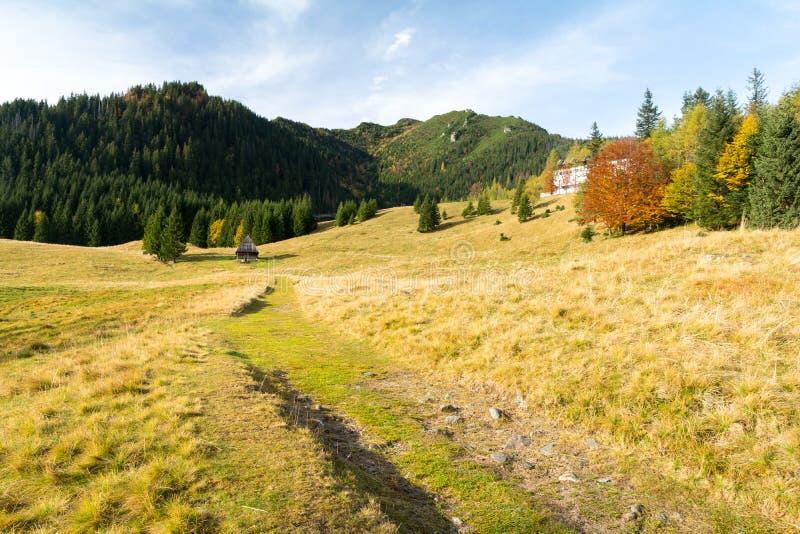 Prado bonito em montanhas de Tatra no Polônia durante o outono foto de stock