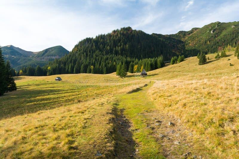 Prado bonito em montanhas polonesas de Tatra, Zakopane, Polônia fotos de stock