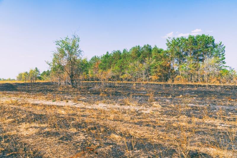 Prado chamuscado delante del bosque fotos de archivo