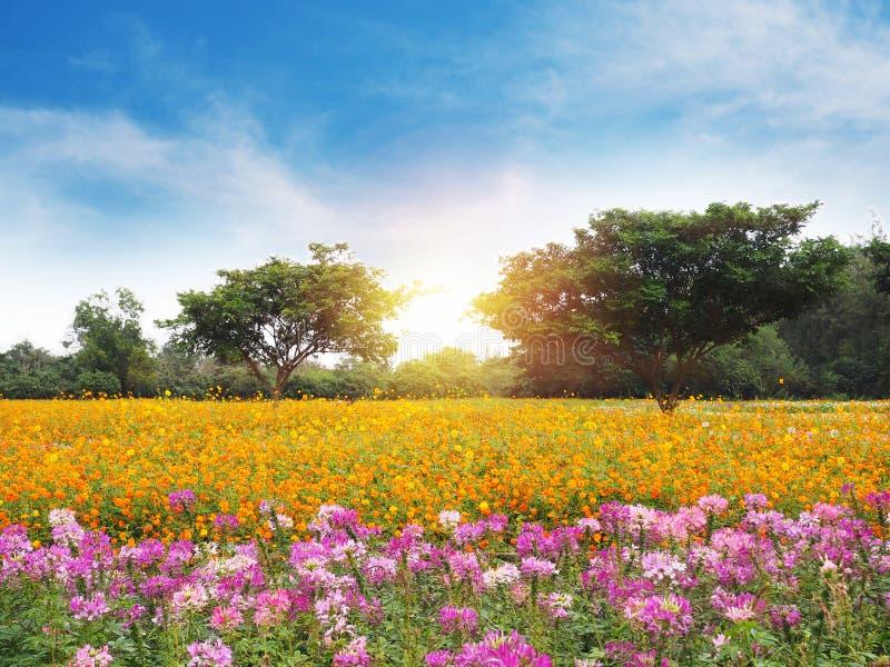 Prado colorido de la flor y cielo azul fotografía de archivo