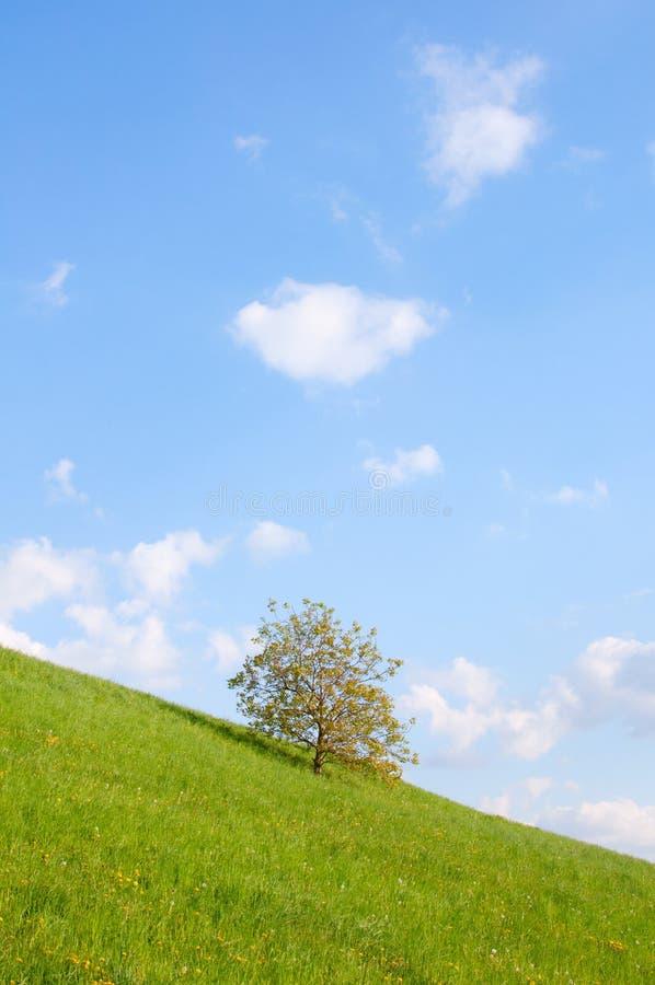 Prado com única árvore imagem de stock royalty free