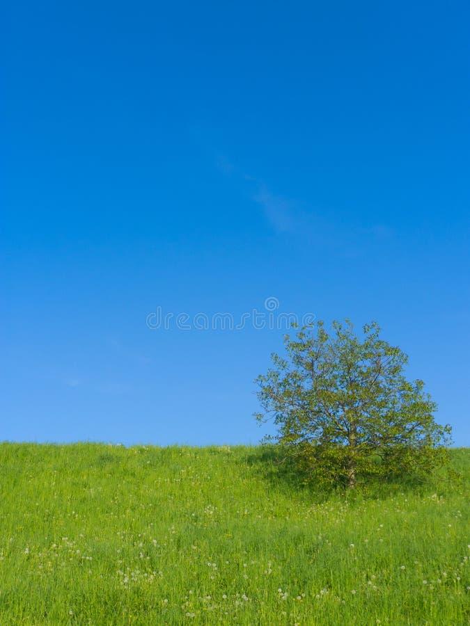 Prado com única árvore imagem de stock