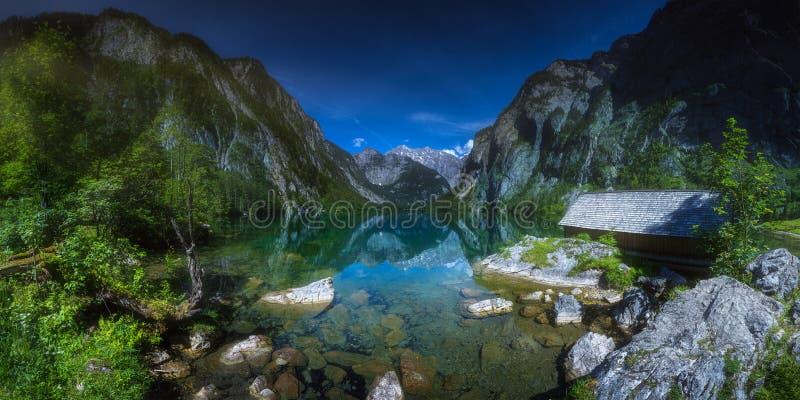 Prado com as vacas no parque nacional de Berchtesgaden fotos de stock royalty free